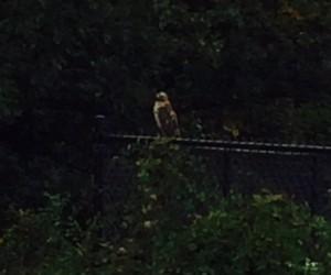bird on a fence